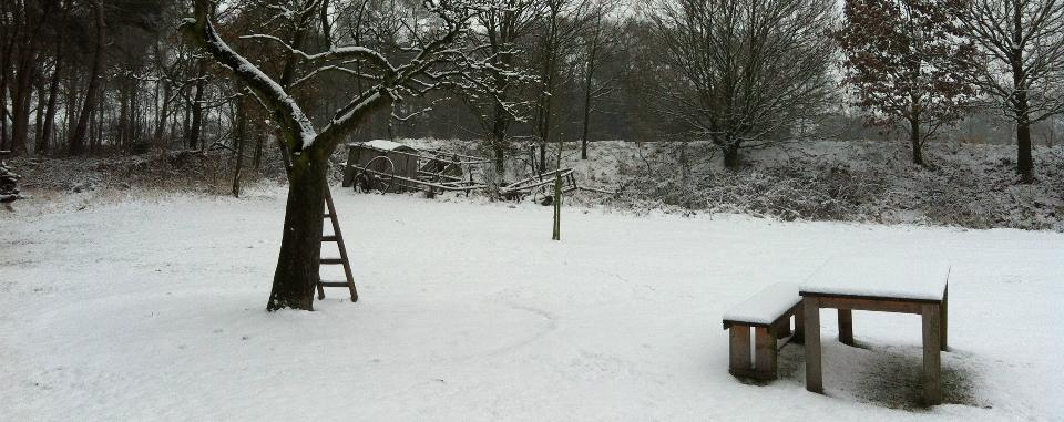 kampeerplek-winter-boom-ladder