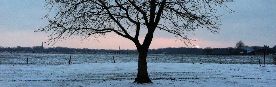 kerseboom-winter-e1448964853139