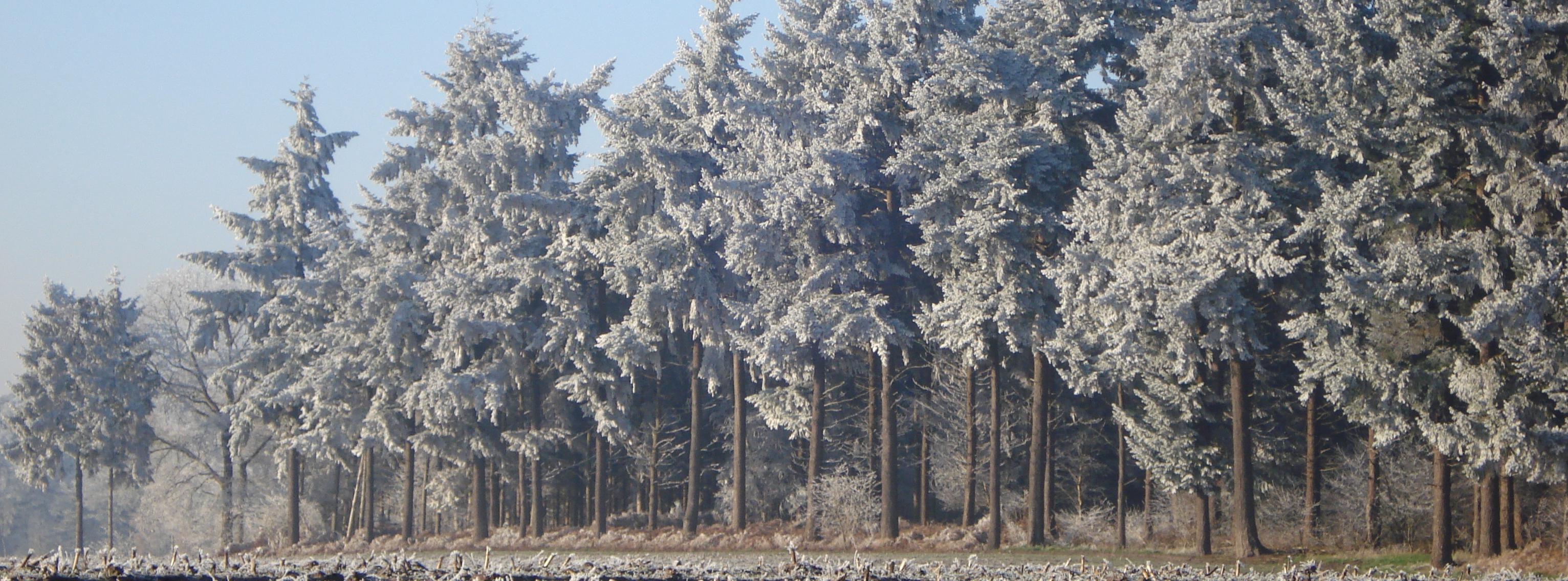 vorden-winter-2007-008-e1575219467161